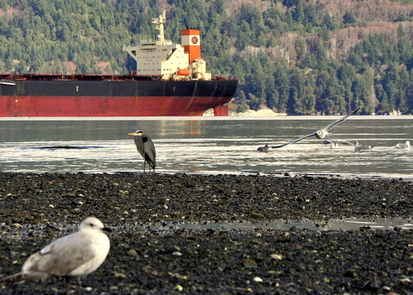 birds and ship