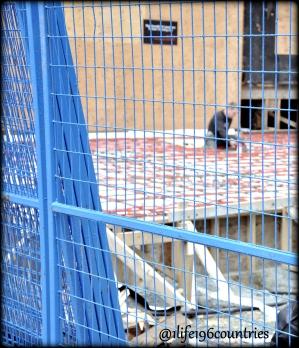 blue fence man