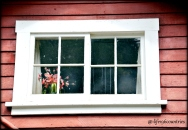 flowers in window